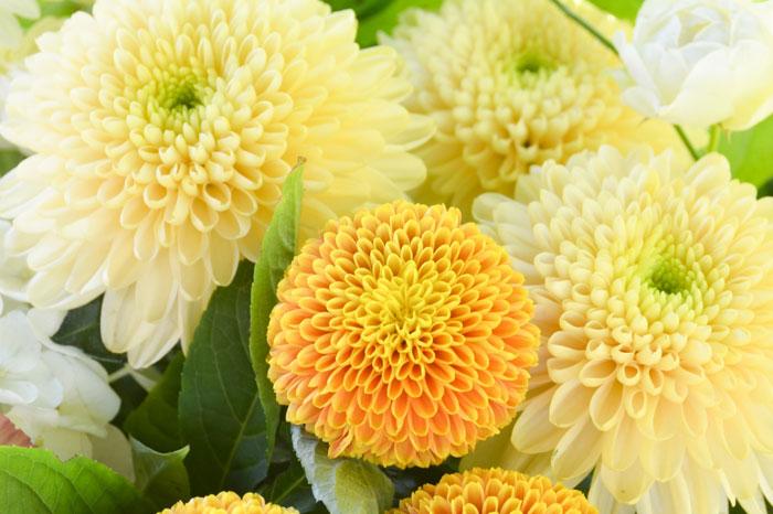 供花を送る際の注意